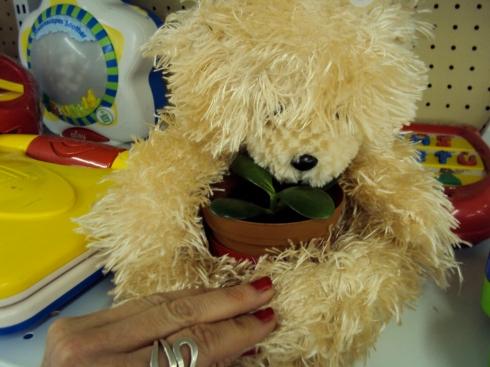 Yes, you can even use a stuffed animal as a decorative plant pot