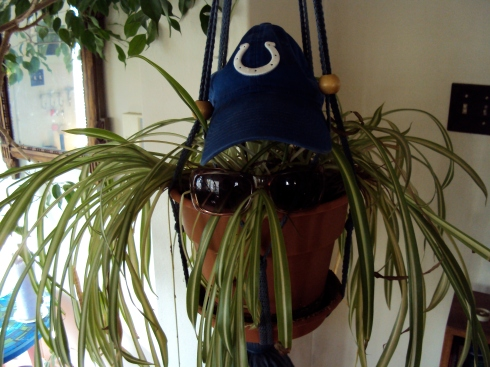 Spider plant and Colts fan
