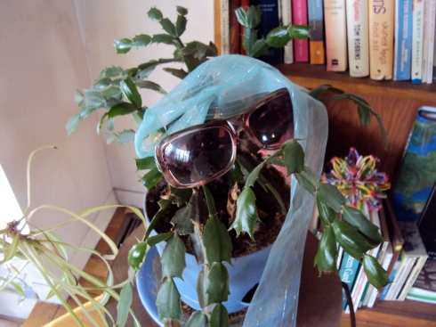 Stylish Christmas Cactus