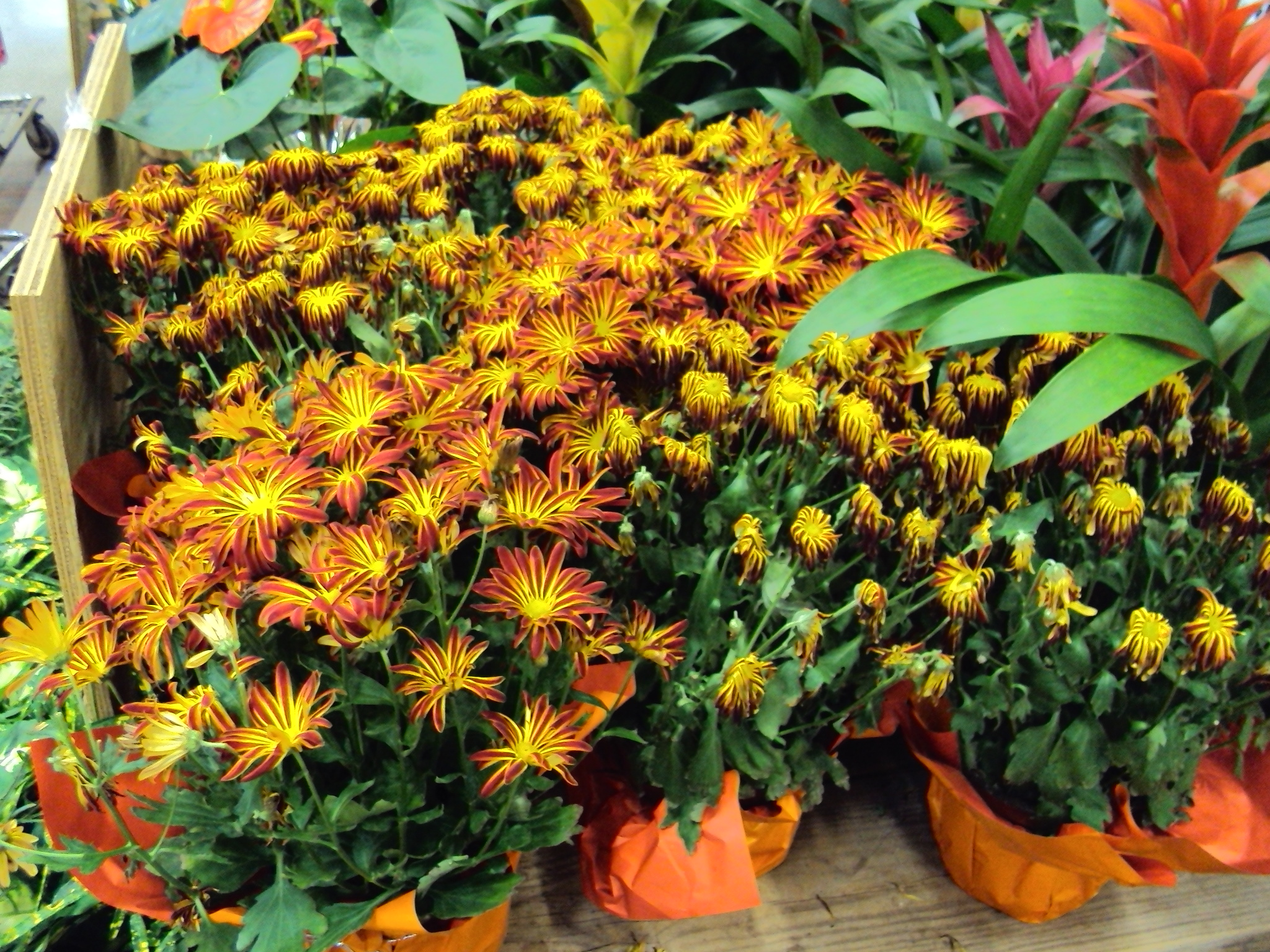 Tuesday - Flowers and Flowering Plants Why Your Local ...