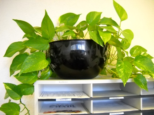Pretty Pothos plant in Susan's office at KOBtv