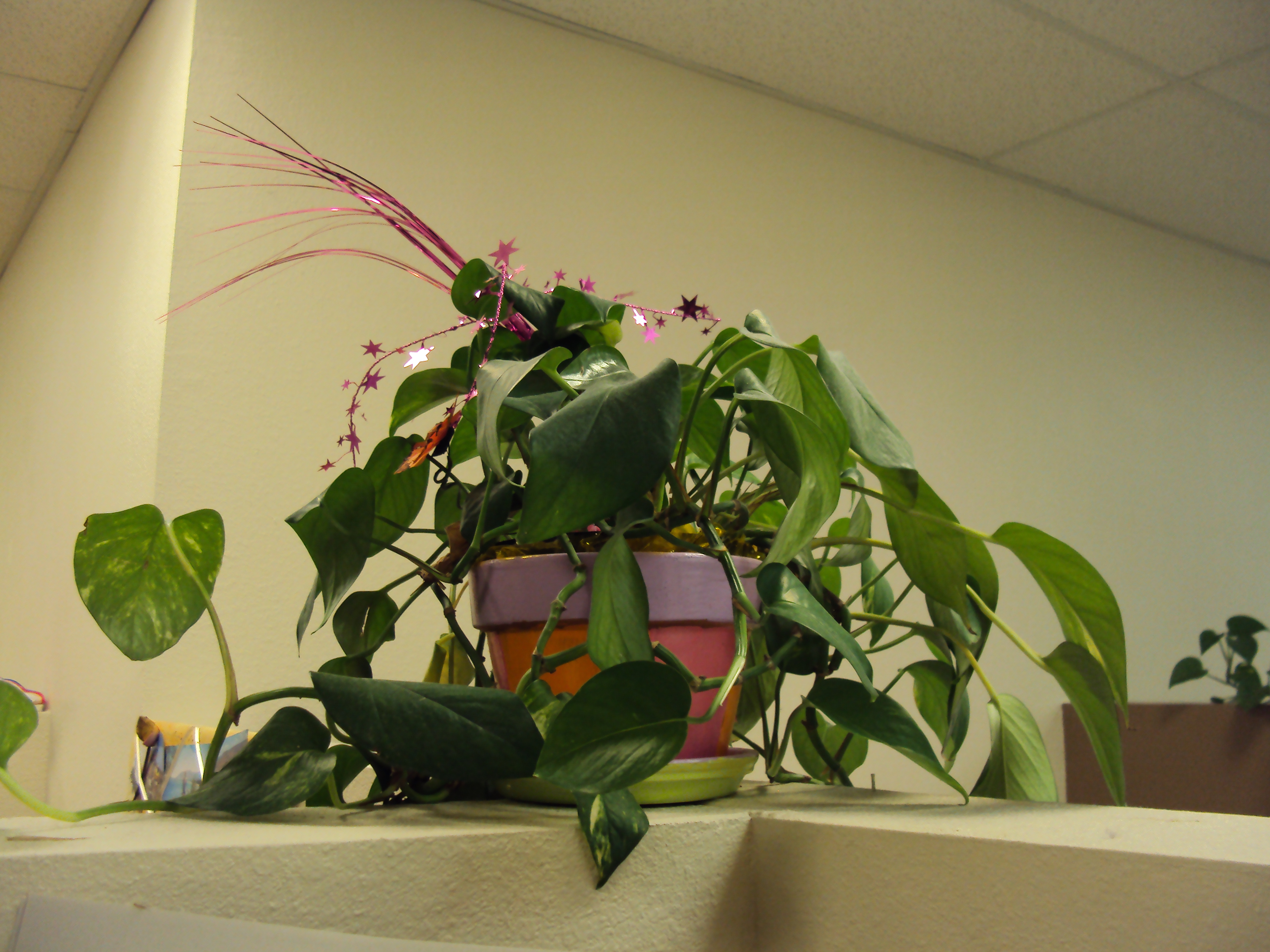 how to repot a Pothos | Good To Grow