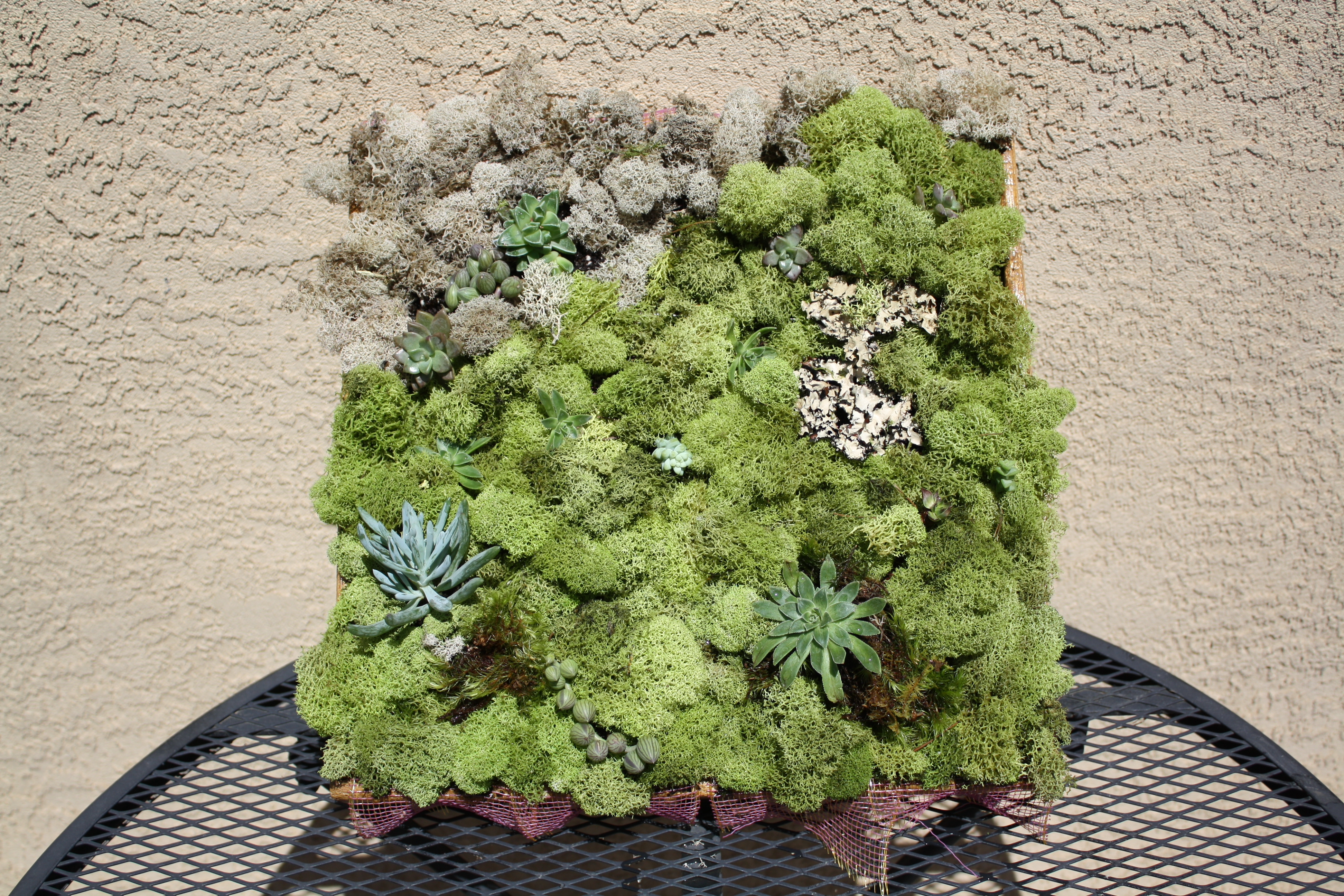 Living Wall Art succulents | good to grow | page 3
