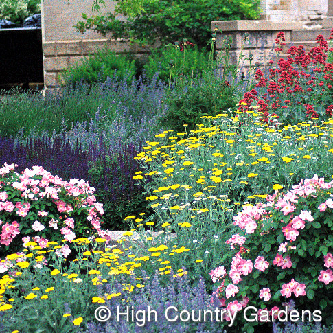 High country gardens nursery good to grow for Pre planned landscape