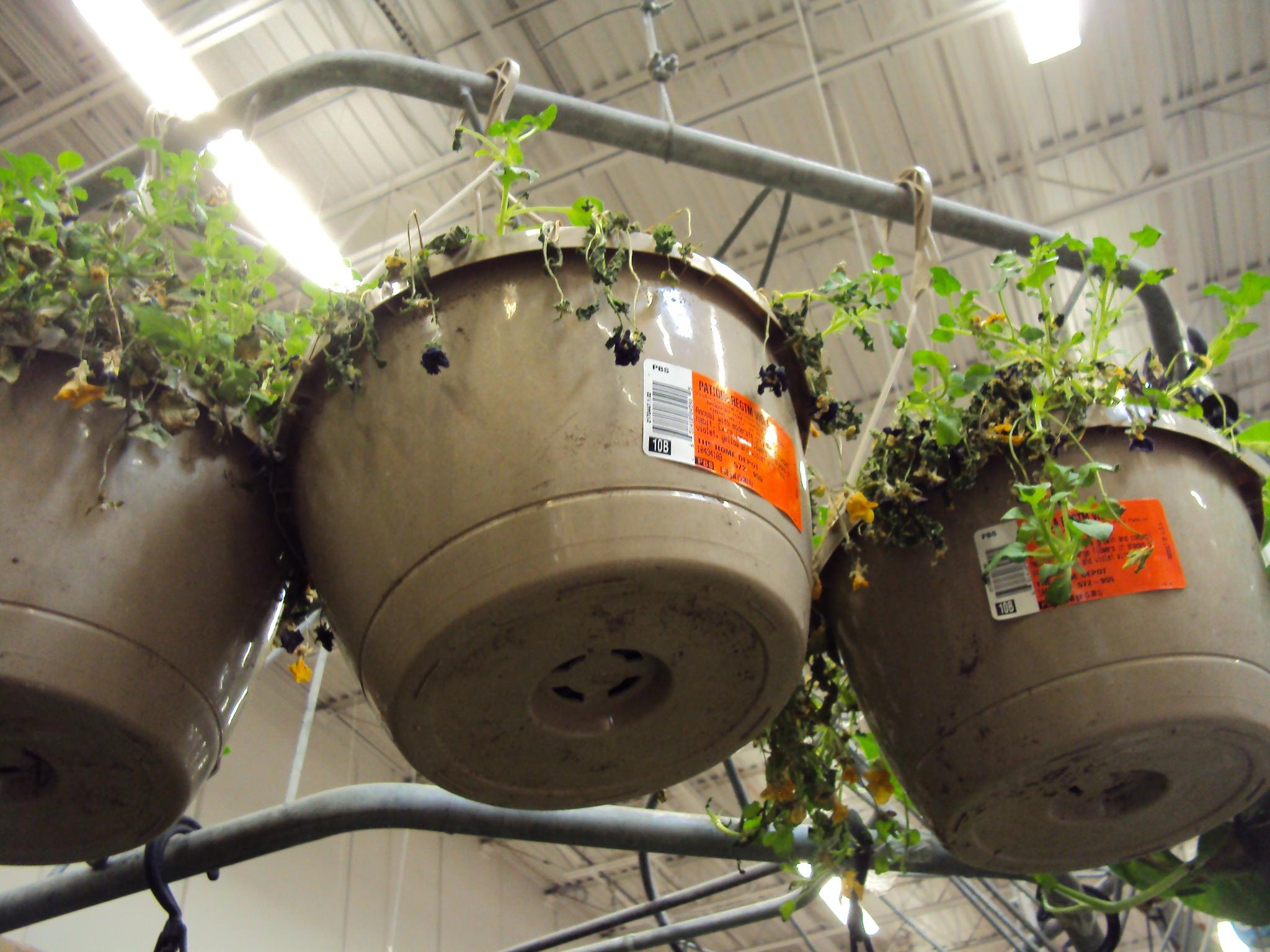 Home Depot | Good To Grow