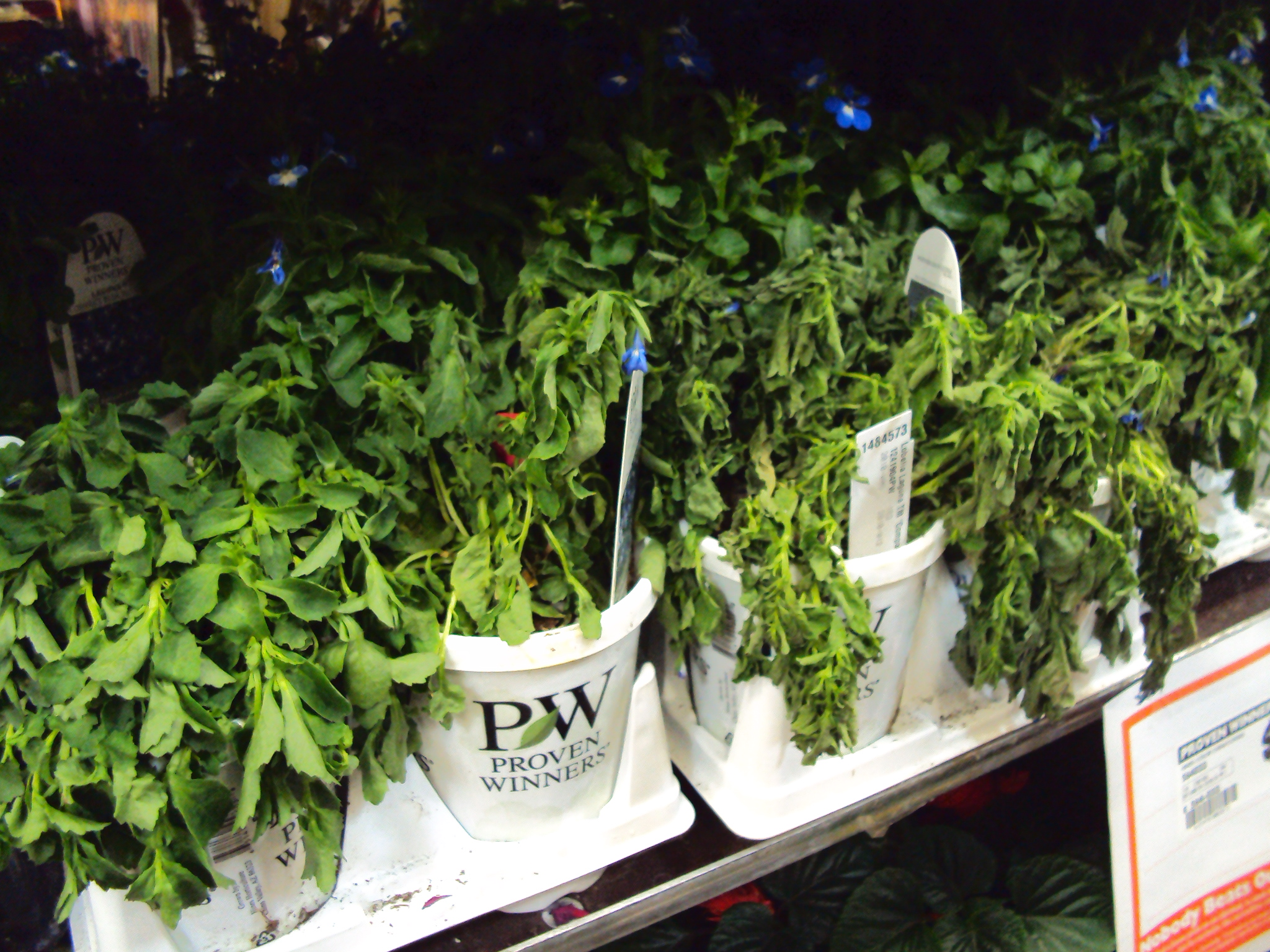 100 shop tropical plants at lowes com house plants for begin
