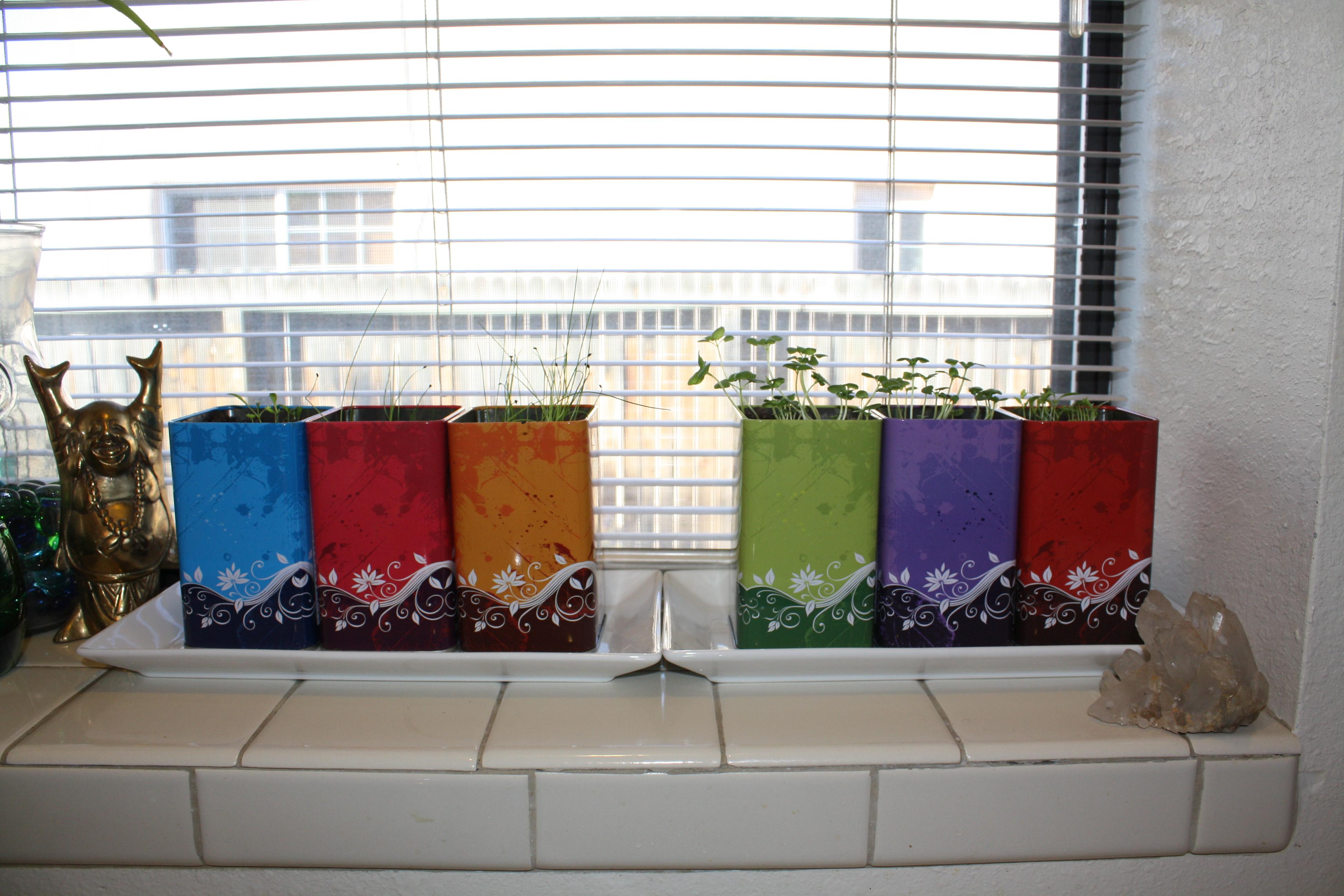Kitchen Window Herb Garden Kit Ode To Kitchen Windowsill Plants Good To Grow