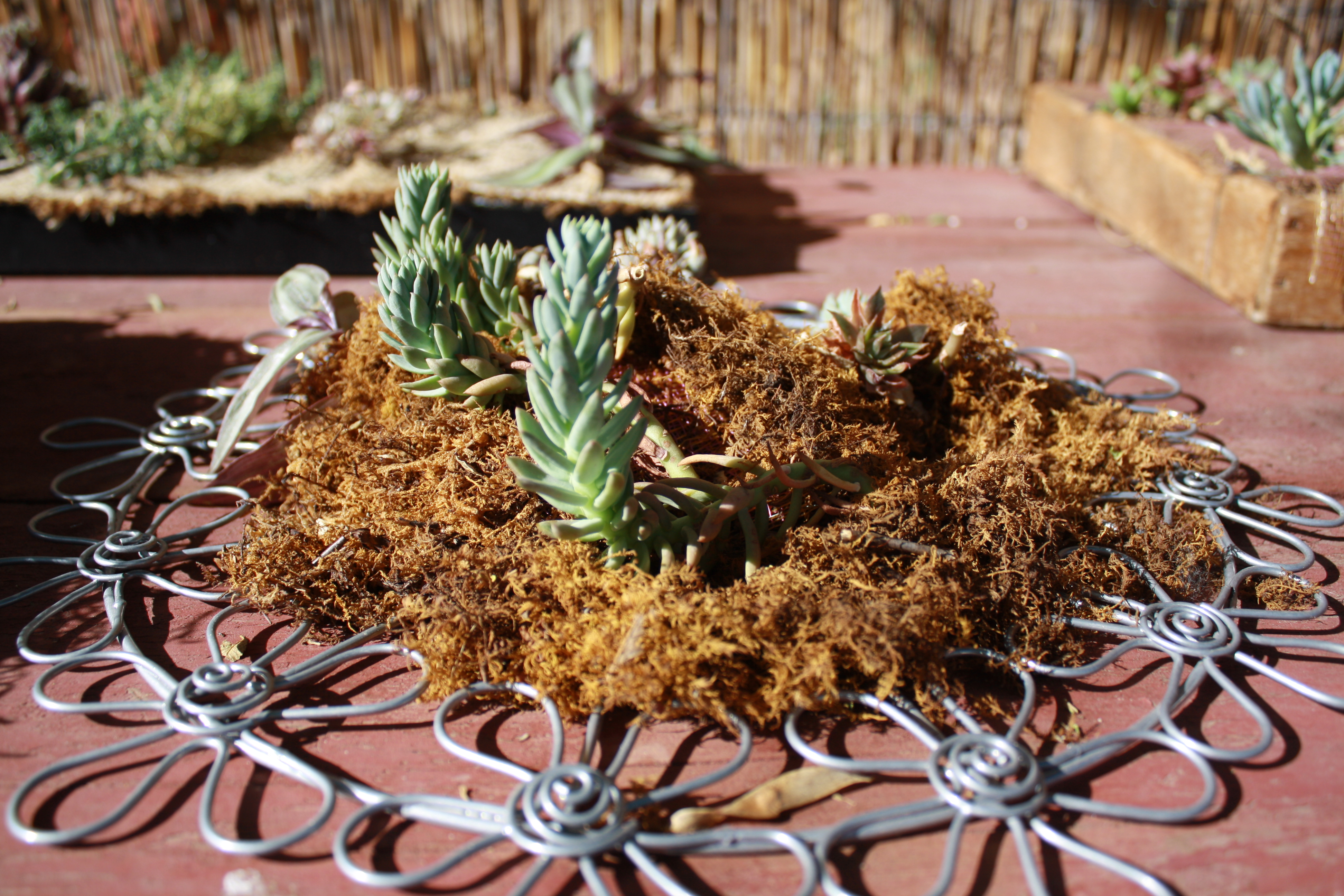 Succulents | Good To Grow | Page 2