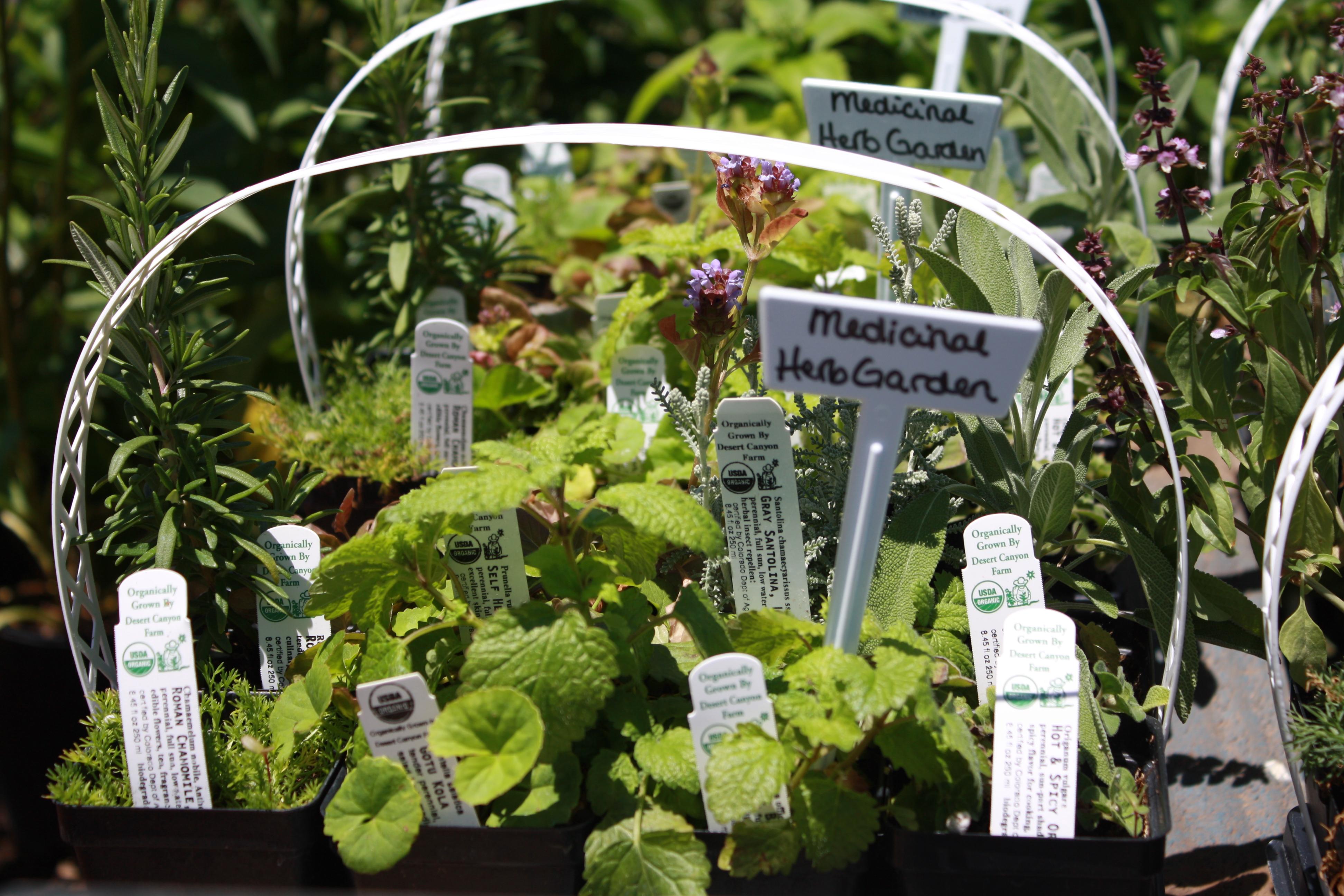 Tuesday albuquerque s best plant nurseries plants of the southwest