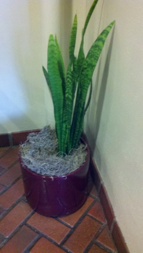 Good To Grow, Liza's photos, real or fake plant puzzler