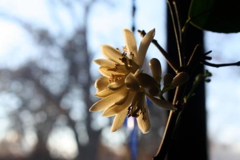 Good To Grow, Liza's photos, December Garden Bloggers' Bloom Day
