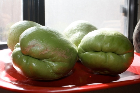 Good To Grow, Liza's photos, Chayote squash growing experiment