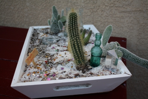 Good To Grow, Liza's photos, desert fairy cactus garden
