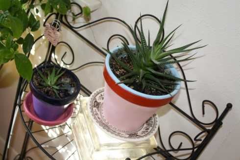 Good To Grow, Liza's photos, Hank the Haworthia and son