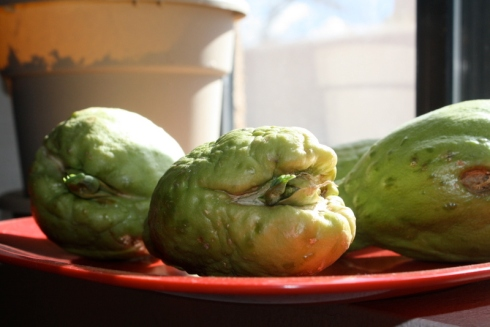 Good To Grow, Liza's photos, Chayote Growing Experiment