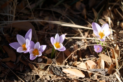 Good To Grow, Liza's photos, spring flowers