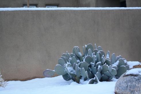 Good To Grow, Liza's photos, snow in the Duke City