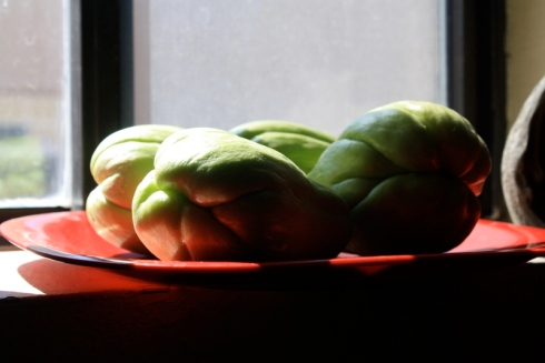 Good To Grow, Liza's plants, Chayote growing experiment