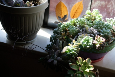 Good To Grow, Liza's plants, new blooms in the house