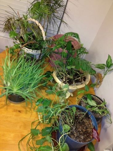 Good To Grow, The Plant Lady Chronicles, reader photo
