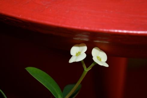 Good To Grow, Liza's photos, April 2013 GBBD