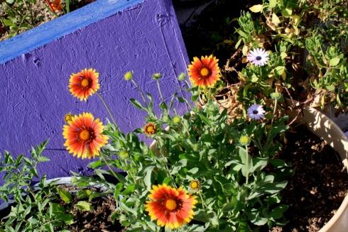 Good To Grow, Liza's photos, Weeds in the Garden