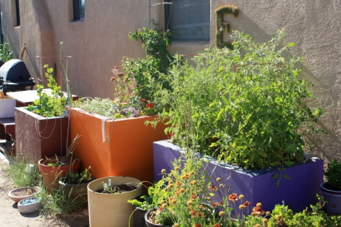 Good To Grow, Liza's plants, My Backdoor Container Garden Oasis