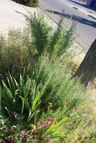 Good To Grow, Liza's plants, My Backdoor Container Garden Oasis