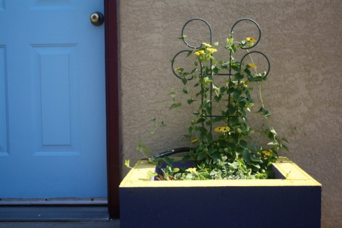 Good To Grow, Liza's plants