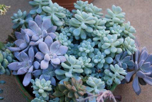 Good To Grow, Liza's photos, Plants 101 - Maintenance