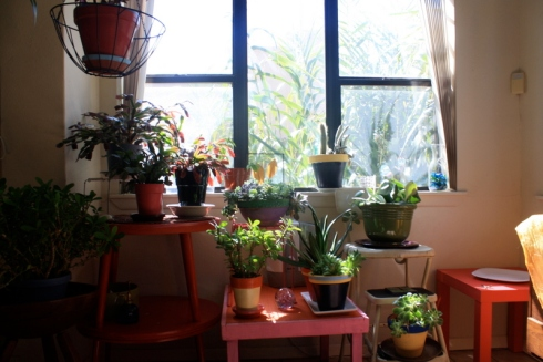 Before you invite plants into your home, you should be prepared. They are living, breathing creatures and are 100% dependent on your care once they are inside your home. My regular readers have heard me say that a million times, but in case there are plant newbies, or potential plant newbies, out there reading this, be informed! Their life literally depends on you.