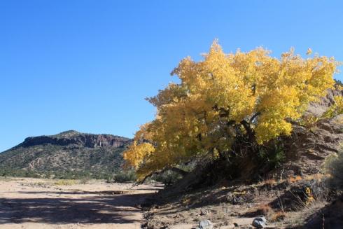 Good To Grow, Liza's photos, Diablo Canyon, Santa Fe, New Mexico