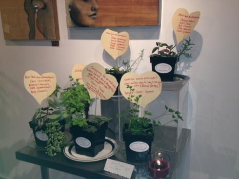 Good To Grow, Liza's photos, houseplants grown in Albuquerque
