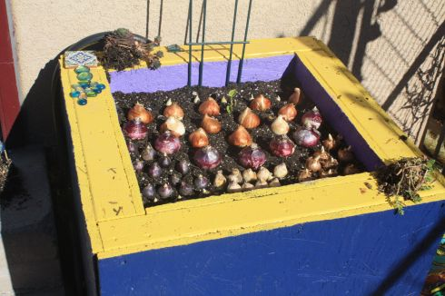 Good To Grow, Liza's photos, How To Plant Spring Bulbs