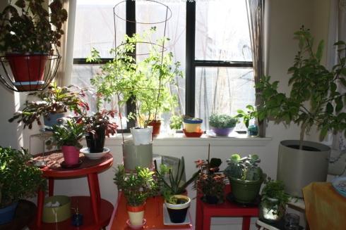 Good To Grow, Liza's photos, Liza's foyer plants