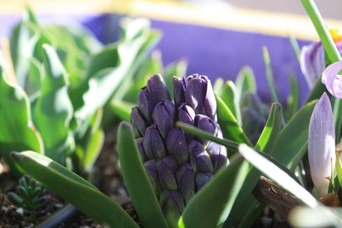 Good To Grow, Liza's photos, purple spring garden