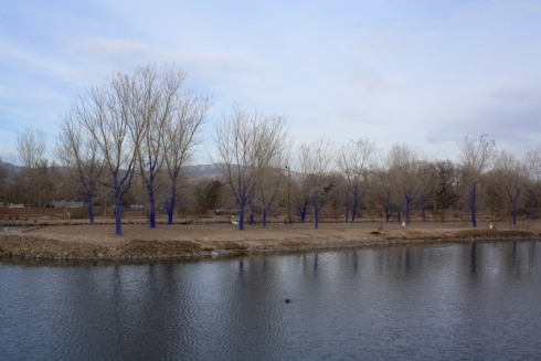 Good To Grow, Liza's photos, a walk along the bosque in Albuquerque