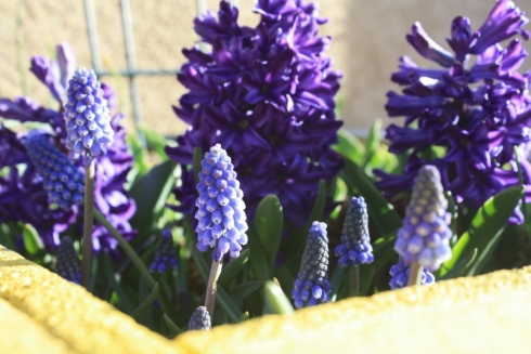 Good To Grow, Liza's photos, spring flowers