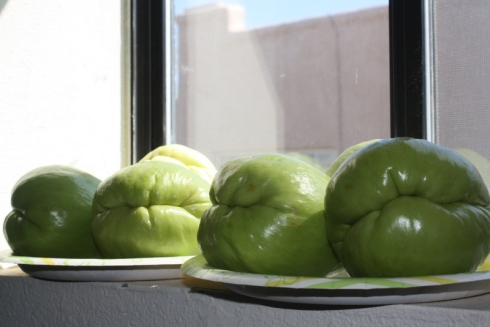 Good To Grow, Liza's photos, return of the Chayote squash
