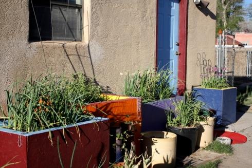 Good To Grow, Liza's photos, The Plant Lady Chronicles