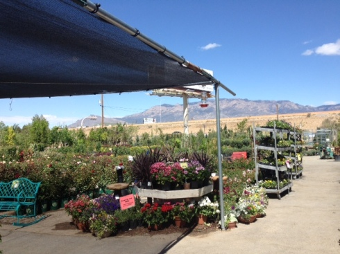 Good To Grow, Liza's photos, my favorite plant nursery in Albuquerque