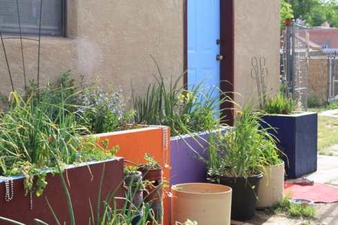 Good To Grow, Liza's backdoor container garden oasis