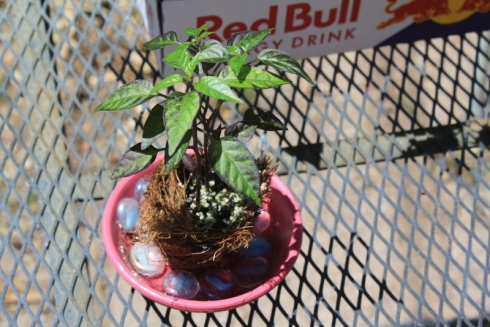 Good To Grow, Liza's photos, The Plant Lady Chronicles