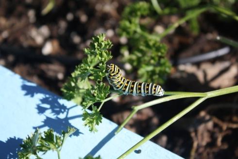 Good To Grow, Liza's photos, Garden Visitor