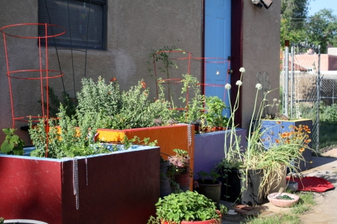Good To Grow, Liza's photos, Liza's container garden