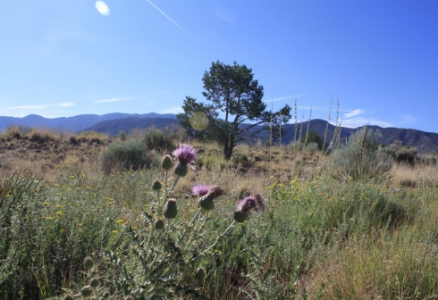 Good To Grow, Liza's photos, pretty thistle by the mountains