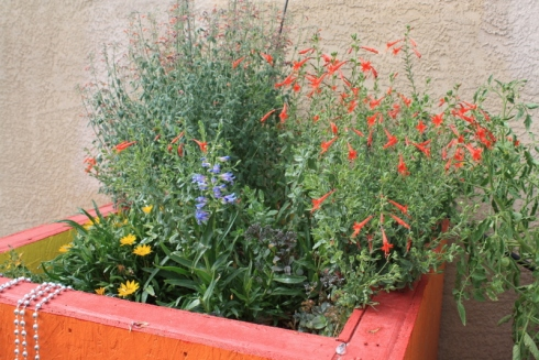 Good To Grow, Liza's photos, my back door container garden oasis