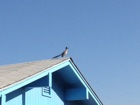 Good To Grow, Liza's photos, Roadrunner on the roof