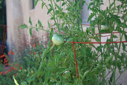 Good To Grow, Liza's plants, Liza's photos
