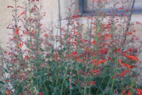 Good To Grow, Liza's photos, hummingbird food